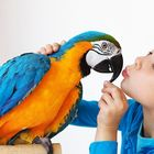 Raising Parrots 101 Pinterest Account