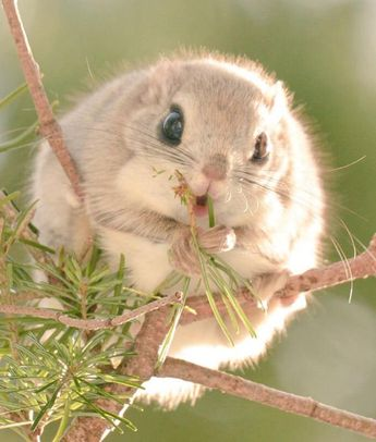 This Rare Flying Squirrel Is So Cute, You Won't Even Believe It's Real