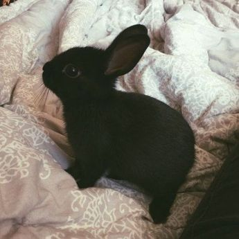 If you are searching for a pet that is not just cute, but simple to keep, then look no further than a pet rabbit. #CuteAnimals