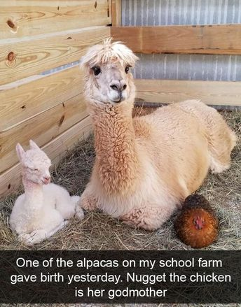 33 Pictures Of Animals Being So Funny That They Actually Received An Award For It