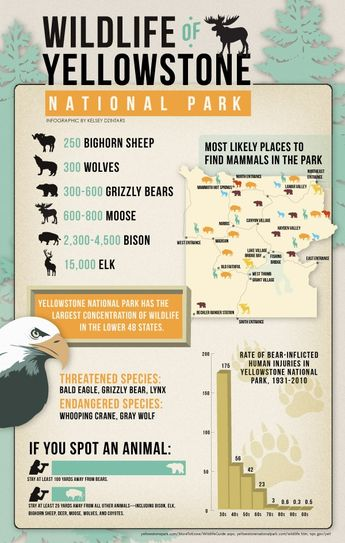 Yellowstone #nationalpark wildlife infographic (January for wolves, elk, bison, antelope, ravens)definitely want to go again. :)