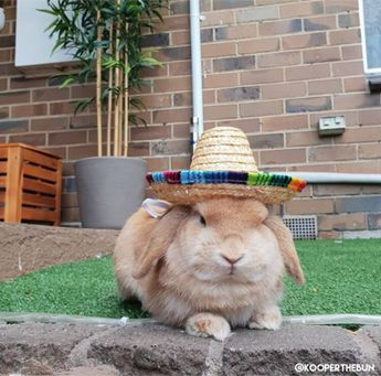 cute small hats for pet rabbits or bunnies
