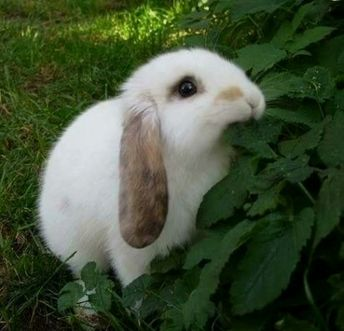 When you are looking for a pet which is not only cute, but easy to have, then look no further than a family pet rabbit.