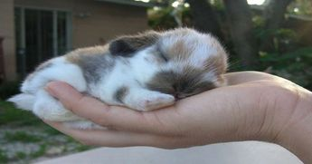 Dwarf Bunnies Are Not Only A Real Thing, But Also Absolutely Adorable