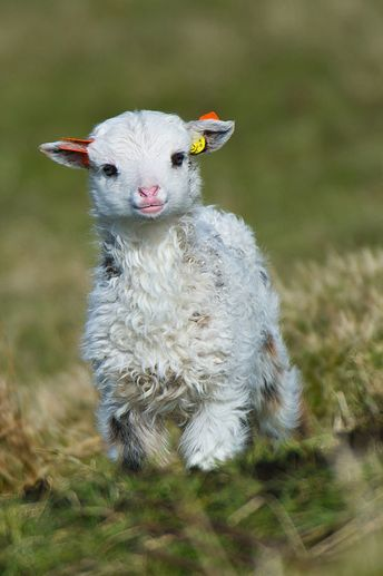 20+ Baby Animals That Can Save Your Gloomy Day