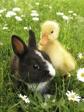 Rabbit Bunny And Duckling Best FriendsBy Richard Peterson