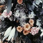 Eliza Ash Visuals Pinterest Account
