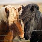 Horse riding gear Pinterest Account