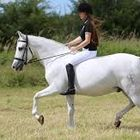 How to ride a horse Pinterest Account