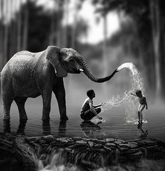 elephant and children