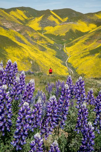 Carrizo, chino hills, Southern California Wildflowers Trip Guide — Explore More Nature