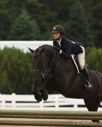 Beautiful black warmblood jumper