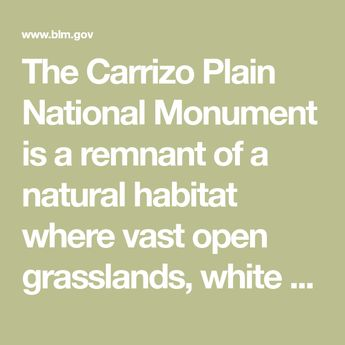 The Carrizo Plain National Monument is a remnant of a natural habitat where vast open grasslands, white alkali flats of the ancient Soda Lake, and a broad plain rimmed by mountains is home to a variety of wildlife and plant species—including several that are threatened or endangered. The area has significant cultural and historical resources and where evidence of the
