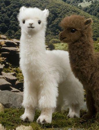25 Best Cutest animals