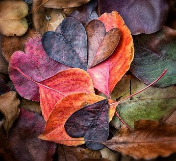 Fall In Love (Explore October 18, 2013)