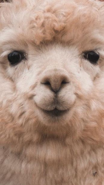 60 Funny Furry Animals To Brighten Your Day