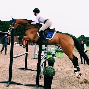 New ambassador blog written by @mwl.equestrian 🐎 head to thefitequestrian.com to read about Martha's experience trying horses in Europe and… #equestrian