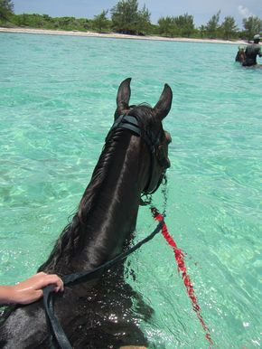 I want to ride a horse in the water! This is totally going on my bucket list!