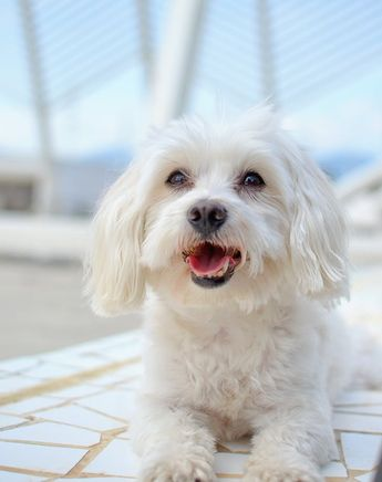 The Best Dogs for Older Folks