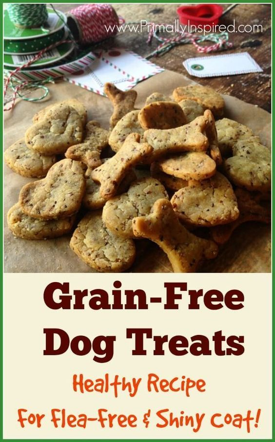 healthy grain free dog food