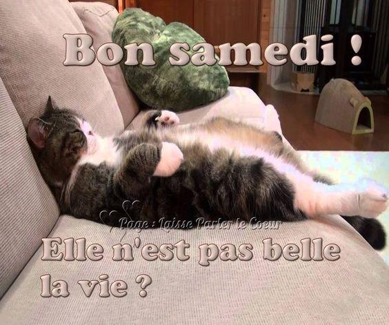Bon samedi ! Elle n'est pas belle la vie ? #bonnesoiree chat canape drole flemme repos humour marrant - Ninou 24 - #belle #bon #bonnesoiree #canape #chat #drôle #Elle #flemme #humour #la #marrant #nest #Ninou #pas #repos #samedi #vie