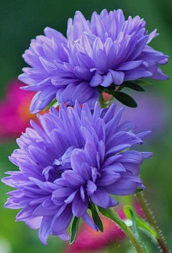 GIFS HERMOSOS: talált Flores EN LA WEB