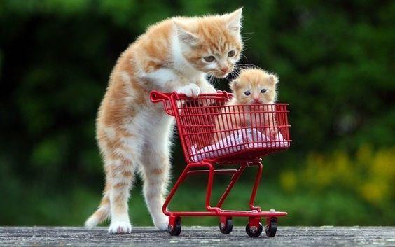 Les chats sont les animaux domestiques les plus appréciés. Du coup, il existe des photos en tous genres de ces petites boules de poiles. Découvrez les 50 meilleures photos de chats de tous les temps ! 1. 2. 3. 4. 5. 6. 7. 8. 9. 1...