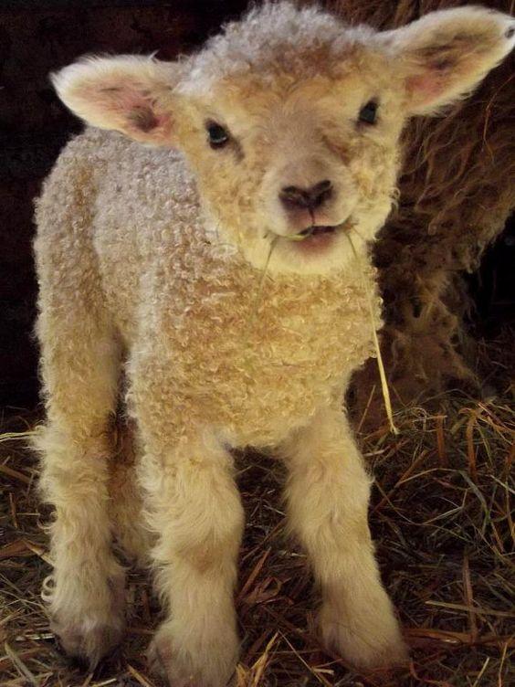 Mary's Little Lamb / 5'' x 7'' picture plaque by ZellnerPrimitives, $4.50