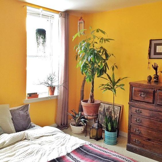 Image result for mustard wall paint