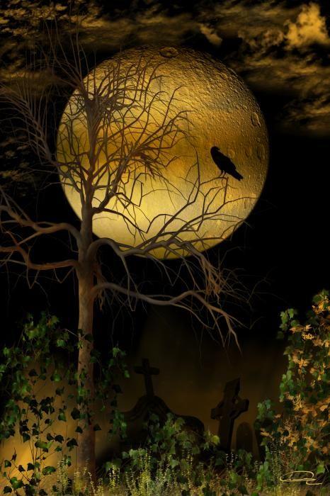 crow drawings - Bing Images                                                                                                                                                                                 More