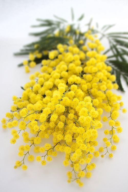 BOUQUET : un bouquet lumineux #bouquet #fleurs #mimosa