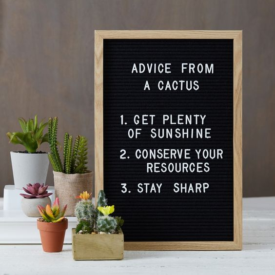 Journey Letter Board advice from a cactus #letterboard #funstampersjourney