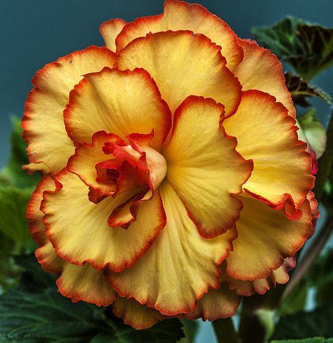 beautiful flower -1 | Flickr - Photo Sharing!