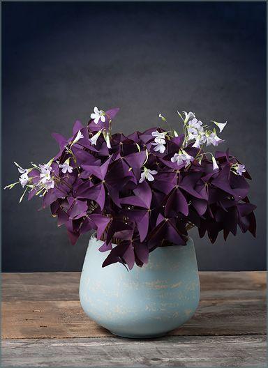 Si vous êtes comme nous, vous raffolez d'un beau bouquet de fleurs fraîches au centre de votre décor, et ce, surtout à l'arrivée du printemps!