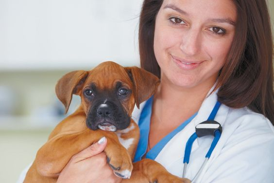a veterinarian holding an adorable brown puppy