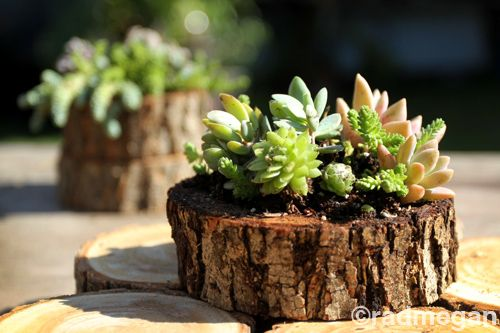 Sea Urchin and Wood Slice Succulent Planters - Radmegan