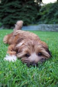 cute puppy playing in the grass as a good exercise