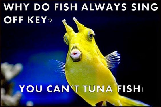 Funny Off Key Tuna Fish