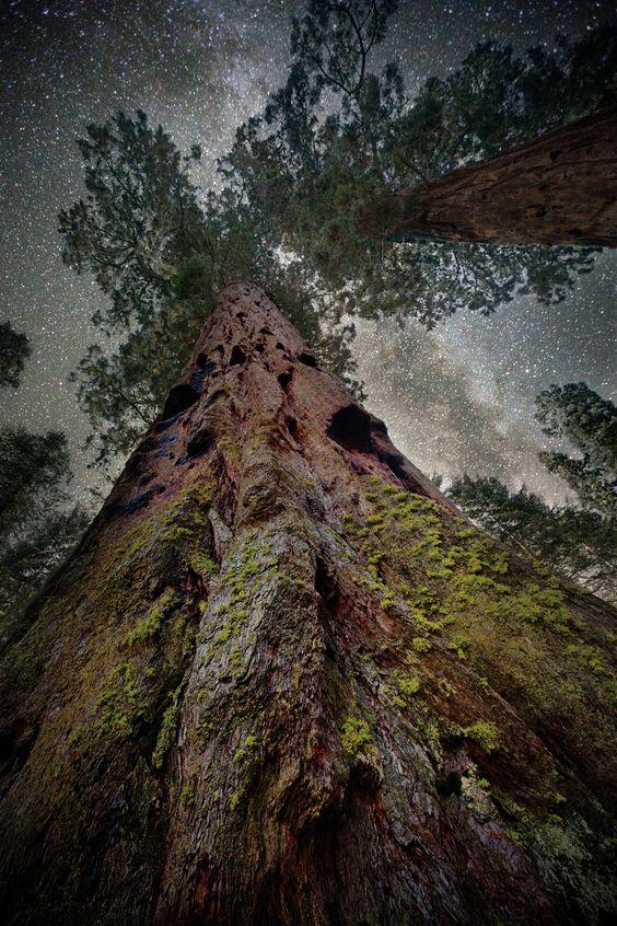 Les plus vieux arbres de la planète  857adf0164303220bef57e41d39dde18