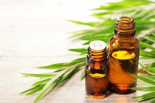 L'huile essentielle d'arbre à thé possède de nombreuses propriétés, par exemple celle d'être efficace pour traiter les maladies bactériennes et fongiques...