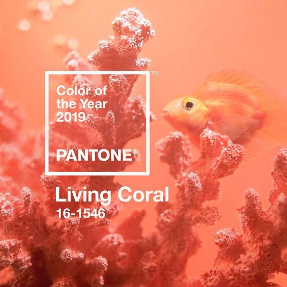Pantone colour of the year 2019 - Living Coral. Not sure we're a huge fan of this colour but it's certainly cheerful!