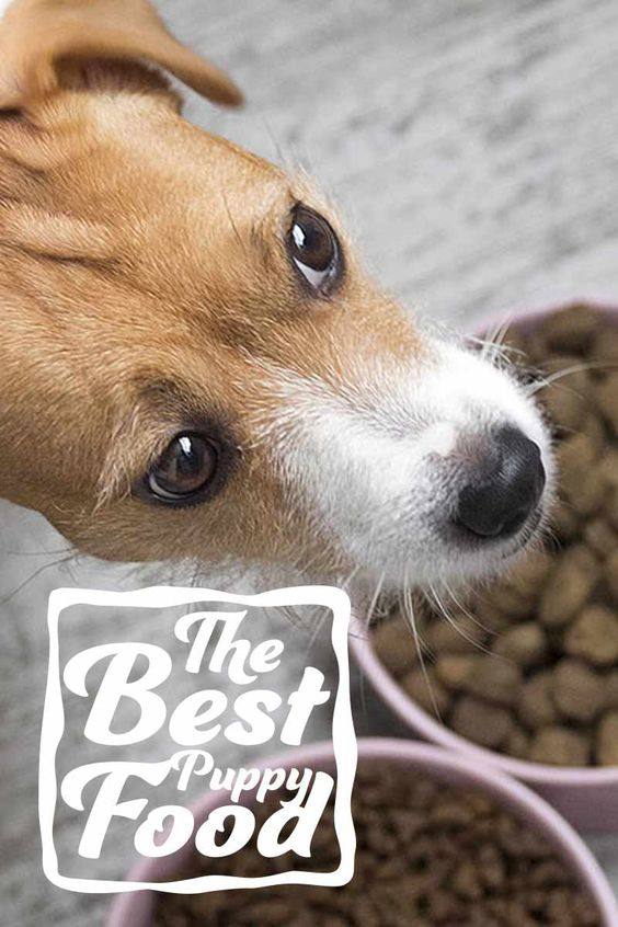 looking for the best puppy food