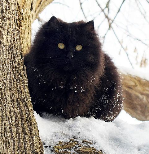 Black puff ball! His face demonstrates exactly how I feel w/ the first snow