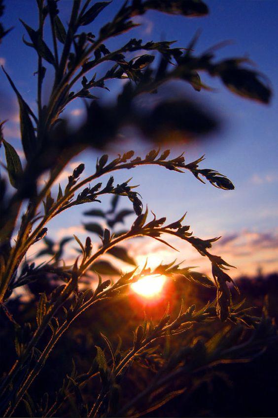 Nature photography  sun  sunset  warm  sky  by MooziXMerchandising, $10.00