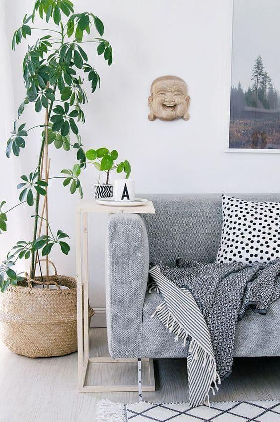 Schefflera Schefflera, also known as an umbrella plant, is a popular houseplant that can grow quite tall.