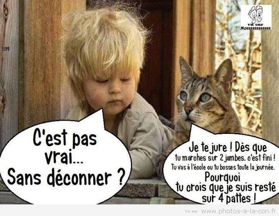 image drole enfant chat