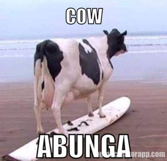 The Absolute Funniest Cow Puns | ViraLuck