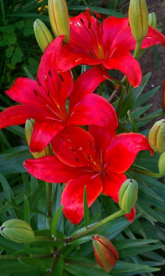 RED flowers JM
