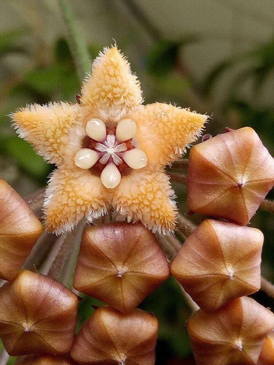 #Exoticflowers