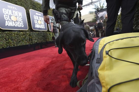 A bomb-sniffing dog were employed during a security sweep at Golden Globe Awards.